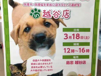保護犬猫の譲渡会だって! in 越谷