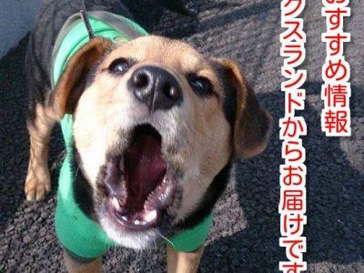 犬やペットロスでお悩みの方は必見、無料カウンセリング開催