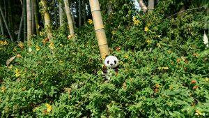 越谷の竹林にパンダ