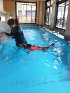 泳ぐレックス
