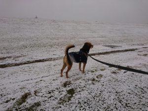 雪の中でたたずむレックス