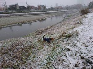 雪遊び中のレックス