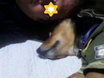 """犬猫を幸せに:""""少しはやい初夢"""""""
