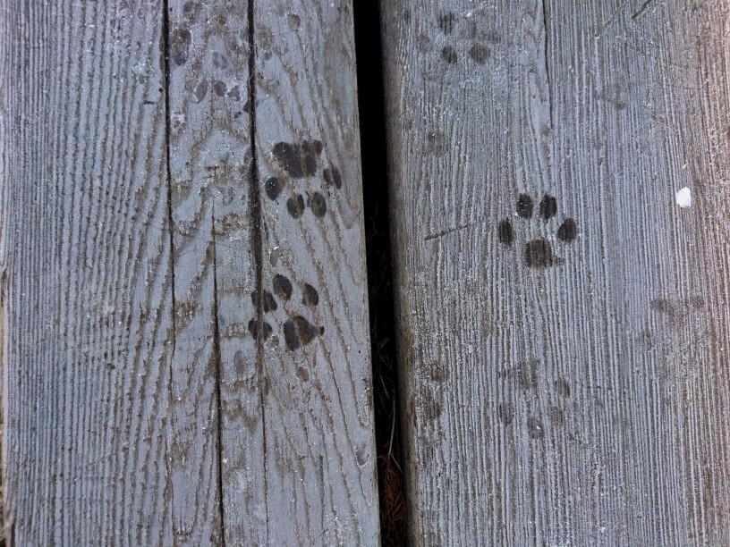 凍った板の上についた犬の肉球