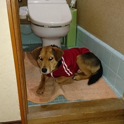 トイレに立てこもり
