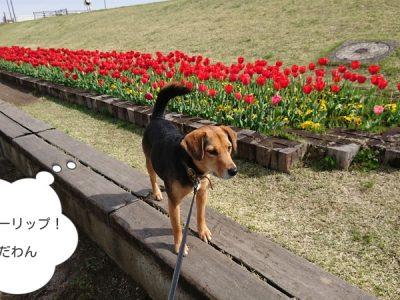越谷にも春が来ましたね~