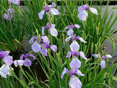 越谷はお花で綺麗ですよ