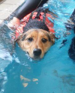 プールで泳ぐレックス