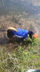 川に入るレックス