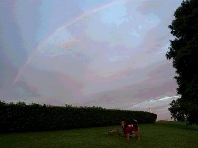 1日に2回も虹を見たよ! 幸せのおすそ分け