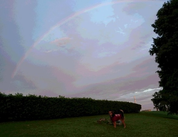 夕方の虹と一緒に