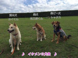 イケメン3犬衆