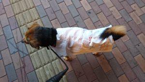 島忠の袋で犬用レインコート
