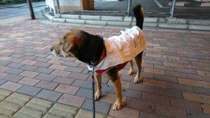 コンビニ袋で犬用レインコート