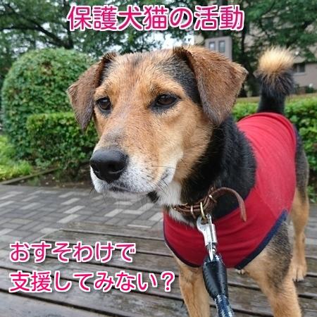 保護犬猫活動をポイントで支援
