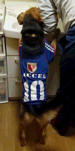 レックスサッカーの服