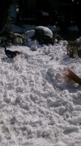 雪の中で走り回るレックス