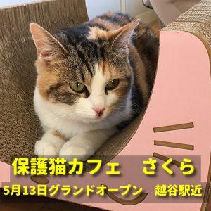 越谷保護猫カフェさくら
