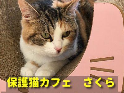 越谷に保護猫カフェさくらオープン!