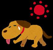 犬の夏の注意点